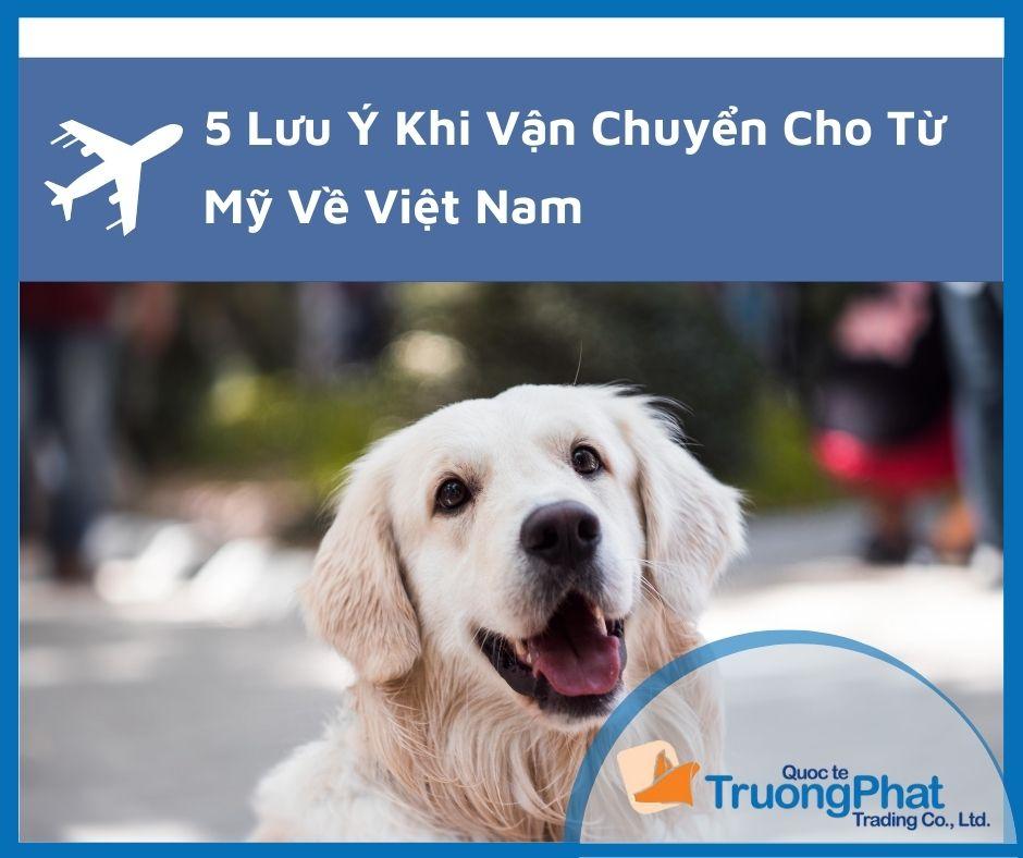 5 Lưu Ý Khi Vận Chuyển Chó Từ Mỹ Về Việt Nam